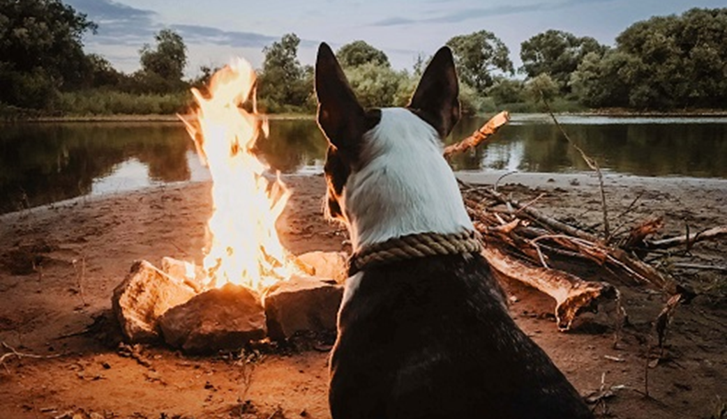 11 Useful Tips For Caravanning with a Dog