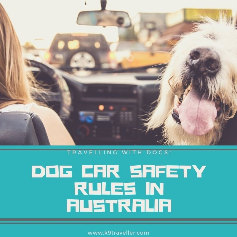 Dog Car Safety Rules in Australia