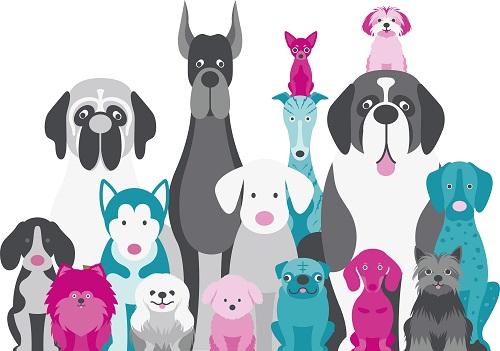Dog Insurance in Australia. Is It Worth It?