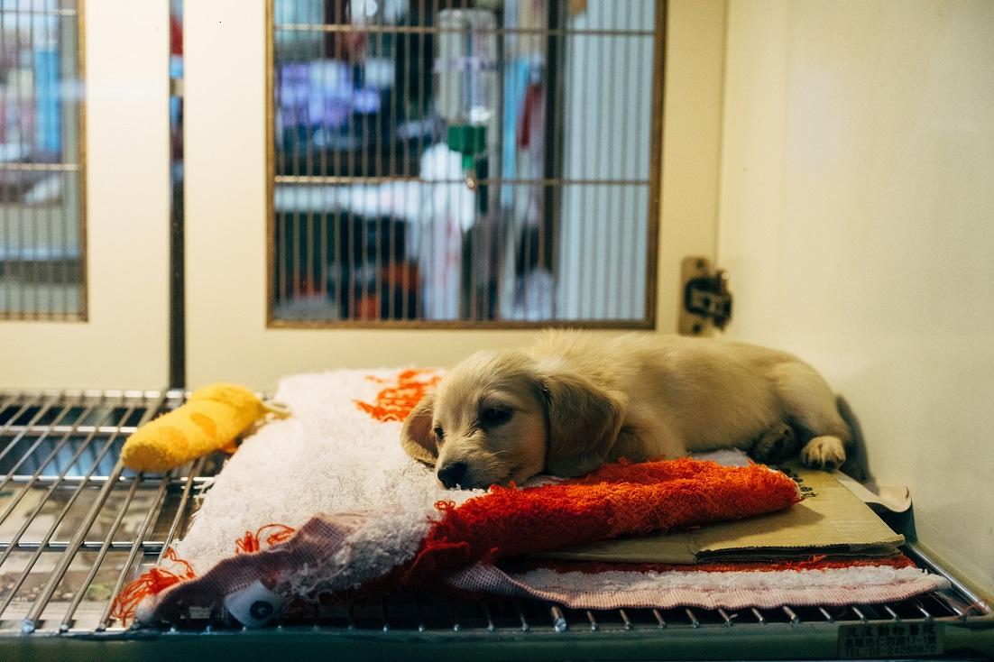 Puppy at vet clinic