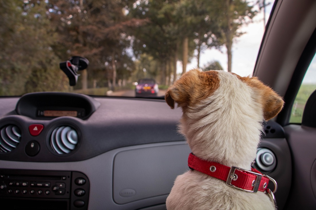 small dog riding in front seat