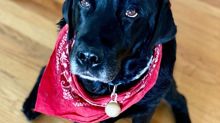 5 Best Dog Friendly Experiences To Share With Your K9
