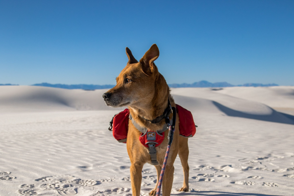 K9 Adventure Dog Travel Products