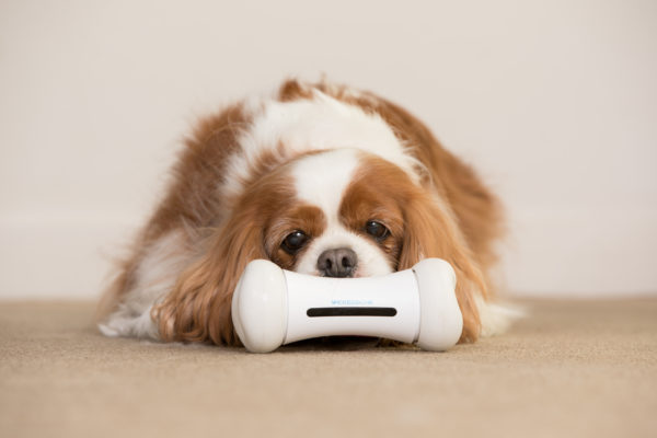 WickedBone Dog Smart Toy