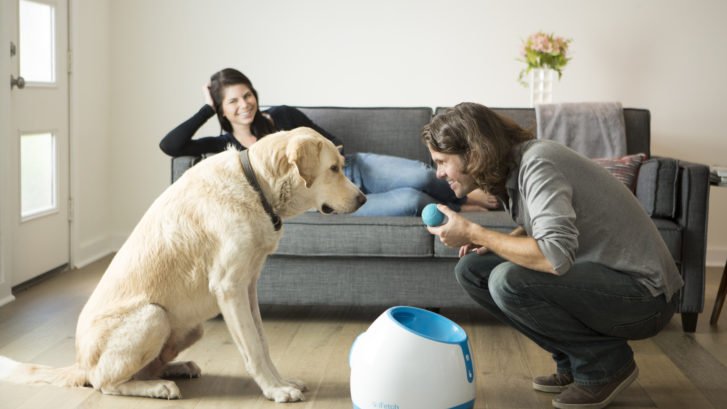How To Keep Your Dog Safe and Occupied After The Coronavirus Lockdown