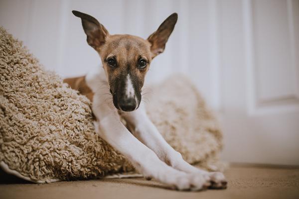 dog bedding and comforts
