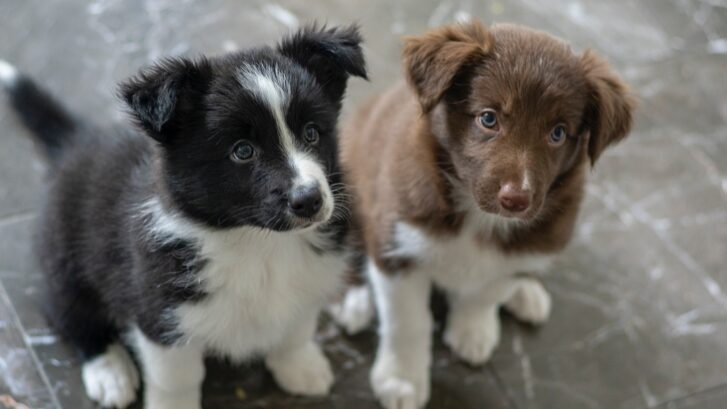 20 Best Dog Names & Tips On Choosing The Right Dog Name