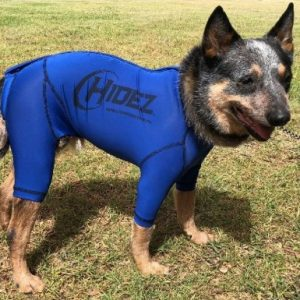 Australian Cattle Dog Anxiety Suit