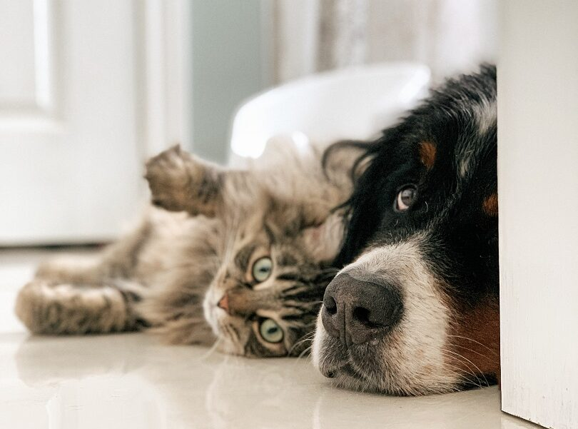 Pet Safe Essential Oil Guide